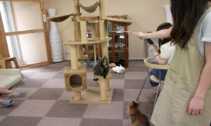 cat cafe toyko