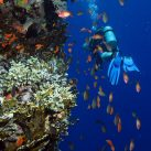 Top 10 Destinations for Scuba Divers
